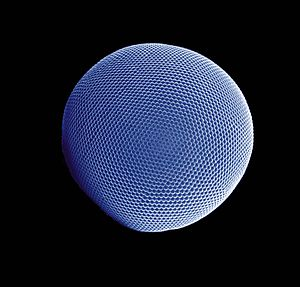 Eye - Compound eye of Antarctic krill