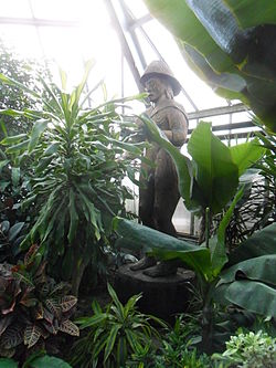 Cedar statue of a man stands virtually naked, in a greenhouse, partly covered by plants.