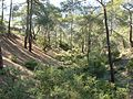 Kyparissia Nature Trail 01.jpg