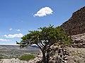 La Quemada, Ruinas - panoramio (1).jpg