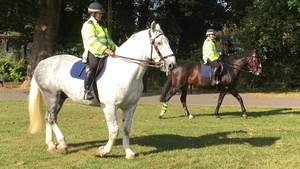 Ladywell Fields - Horses in the park