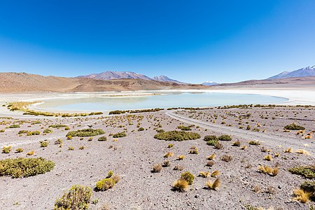 "Laguna Honda (in English ""Deep Lagoon"") is a salt lake located at 4,114 metres (13,497 ft) over the sea level in the bolivian Potosí Department, close to the border with Chile."