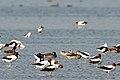 Lake Burrumbeet (24155526744).jpg