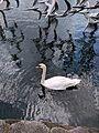 Lake Eola (29738975903).jpg