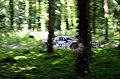 Lancia Rally 037 (28002302666).jpg