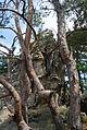 Landschaftsschutzgebiet Harz und Vorländer - Teufelsmauer bei Timmenrode (11).JPG