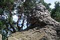 Landschaftsschutzgebiet Harz und Vorländer - Teufelsmauer bei Timmenrode (7).JPG