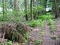 Landschaftsschutzgebiet Horstmanns Holz Melle -Im Wald- Datei 7.jpg