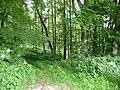 Landschaftsschutzgebiet Horstmanns Holz Melle - Waldanfang- Datei 4.jpg