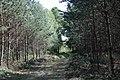Lasy Łączańskie - panoramio (4).jpg
