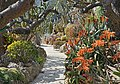 Le jardin exotique de Monaco (47624110281).jpg