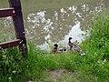 Le long du canal de l'Ourcq, à Sevran 01.jpg