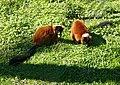 Lemur - panoramio (1).jpg