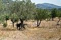 Lesbos - panoramio.jpg