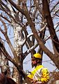 "Lexington Kentucky - Keeneland Race Track ""Jockey through the Trees Branches"" (2144401049) (2).jpg"