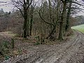 Leygrove's Wood - geograph.org.uk - 117960.jpg