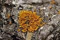 Lichen (42907688902).jpg