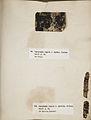 Lichenes Helvetici III IV 1842 022.jpg