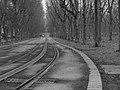 Lines (134748043).jpeg