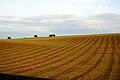 Lines of a new crop in a field near Maree.jpg