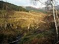 Loch Ard Forest - geograph.org.uk - 1056087.jpg