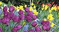 London - April 2009 (3496792059).jpg
