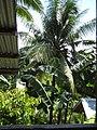 Lottes billeder Philippinerne 2008 001 - Kopi.jpg