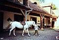 Lubniewice, Ośrodek jeździecki Mustang - fotopolska.eu (217449).jpg