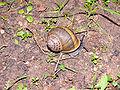 MK-snail001.jpg