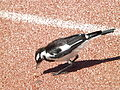 Magpie-lark Olympic Park.jpg