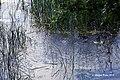 Maria Laach Abbey, Andernach 2015 - DSC07544 Mofetten, Laacher See (19935767396).jpg