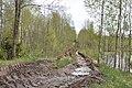 Meža ceļš pie Ziepanvalka, Rojas pagasts, Rojas novads, Latvia - panoramio.jpg