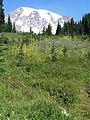 Meadow (3270911a509a42deaa680d80acc13a37).JPG
