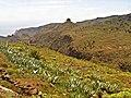 Meadow - panoramio (16).jpg