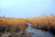 Meadowlands Lyndhurst