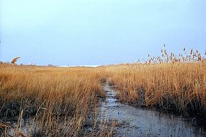 New Jersey Meadowlands - Marshlands in Lyndhurst