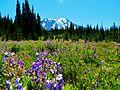 Meadows at Mount Adams Wilderness 01.JPG