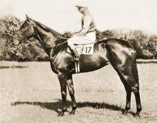 Meld (horse) British-bred Thoroughbred racehorse