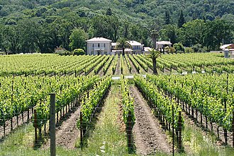 Mendocino County, California - A vineyard in Mendocino County