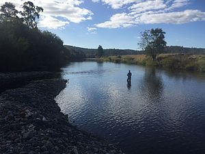 Mersey River (Tasmania) - Mersey River near Latrobe