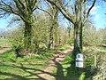 Mid Devon , Knightshayes - Impey Walk - geograph.org.uk - 1271563.jpg
