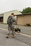 Military working dog and handler practice explosives detection 140729-A-BD610-001.jpg