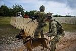 Military working dogs in Guam - 190221-F-YK359-1336.jpg