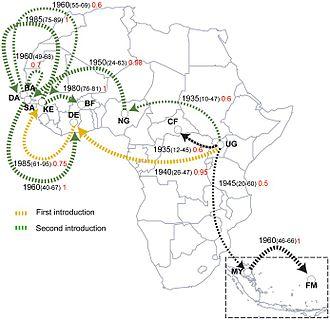 Zika Virus Wikipedia