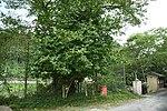 Monument tree of Okuyamada Elementary school's site in Okuyamada, Ujitawara, Kyoto August 11, 2018.jpg