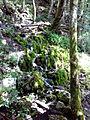 Mosses Pathway.jpg