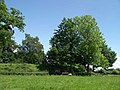 Motte at Shobdon Court - geograph.org.uk - 449734.jpg