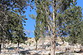 Mount Eitan IMG 2651.JPG
