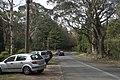 Mount Wilson NSW 2786, Australia - panoramio (19).jpg