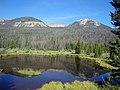 Mountain Pine Beetles (14543470956).jpg